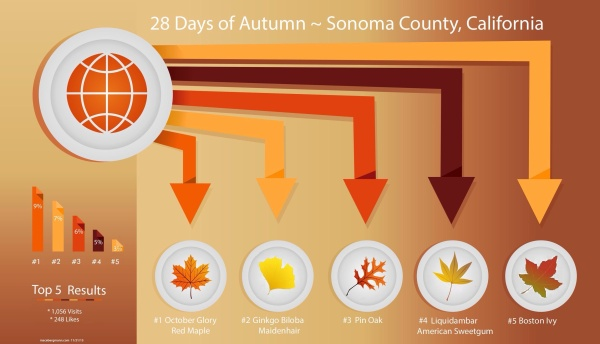 28 Days of Autumn, Sonoma County CA