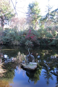 Sonoma Horticultural Nursery Pond