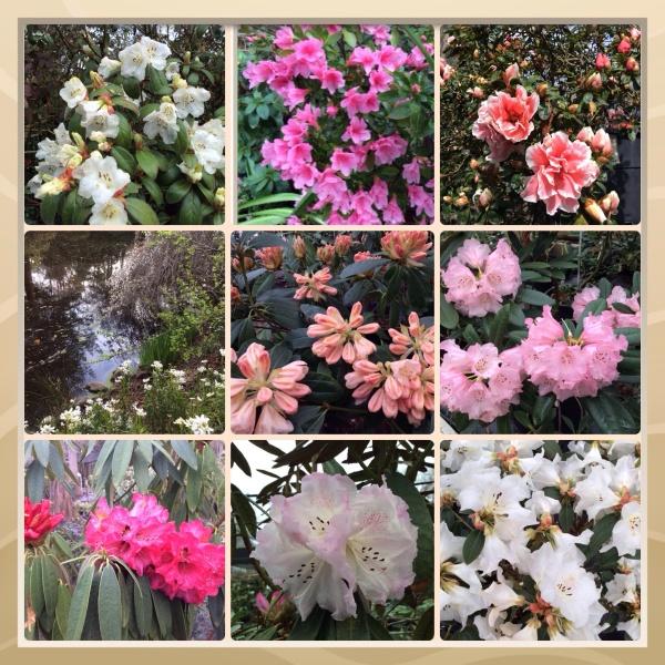 Sonoma County blossom trail 2014 - Sonoma Horticultural Nursery