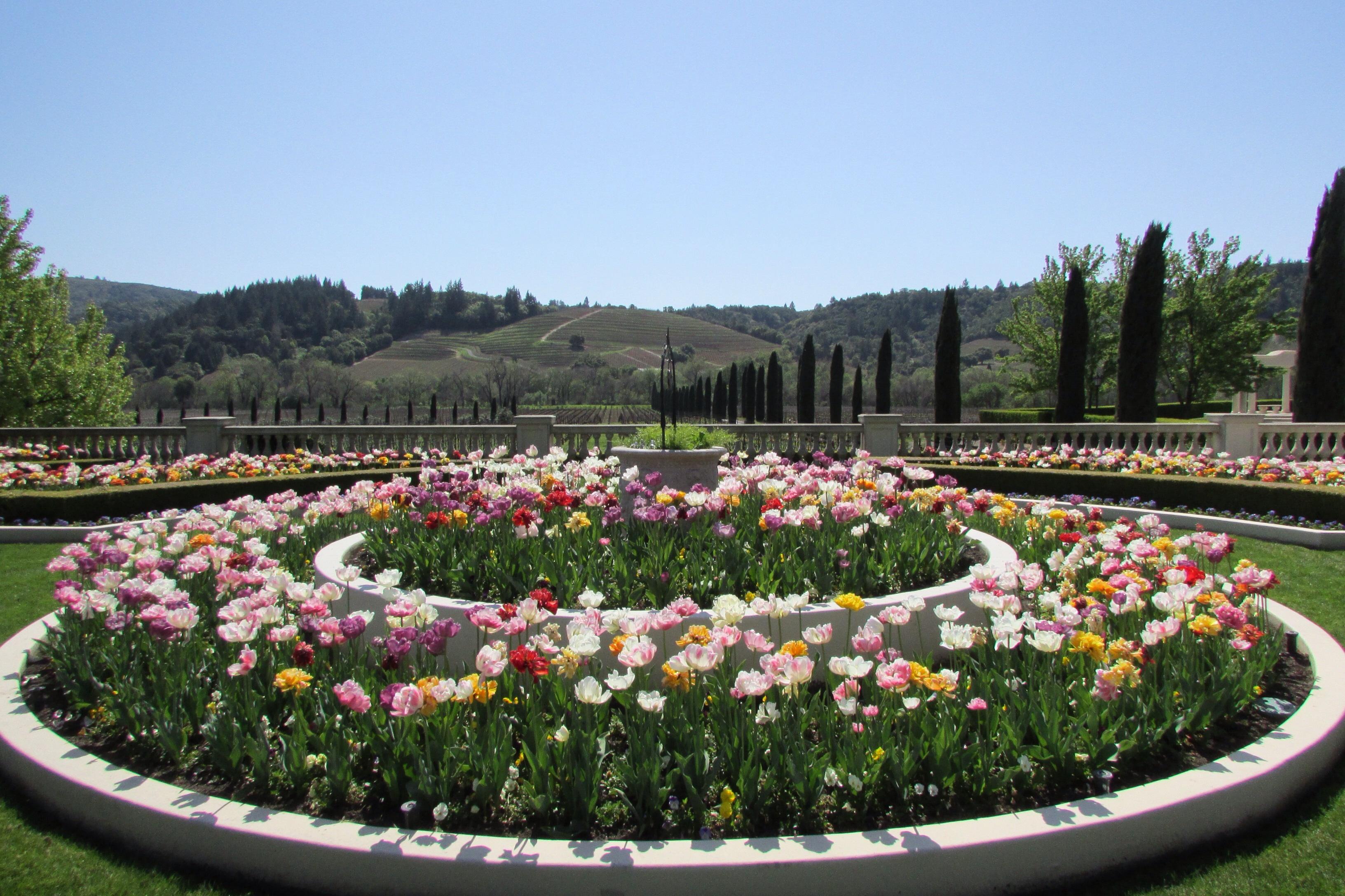 Ferrari Carano Vineyards \u0026 Winery tulip garden \u2013 Healdsburg