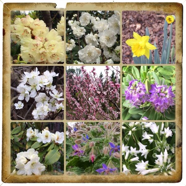 Sonoma County blossom trail 2014