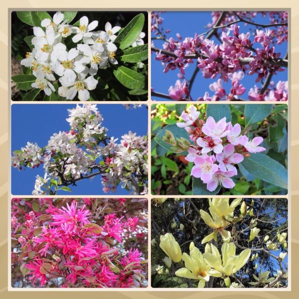 SonomaHort Blossom Trail 2014