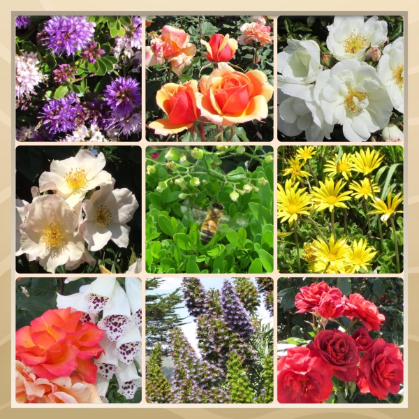 Sonoma County Blossom Trail - Sonoma Horticultural Nursery, May 2014