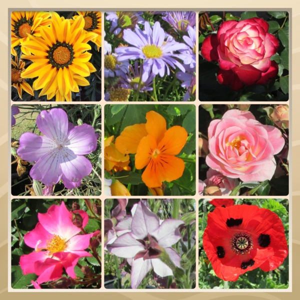 Sonoma County Blossom Trail - Sonoma Horticultural Nursery, April 2014