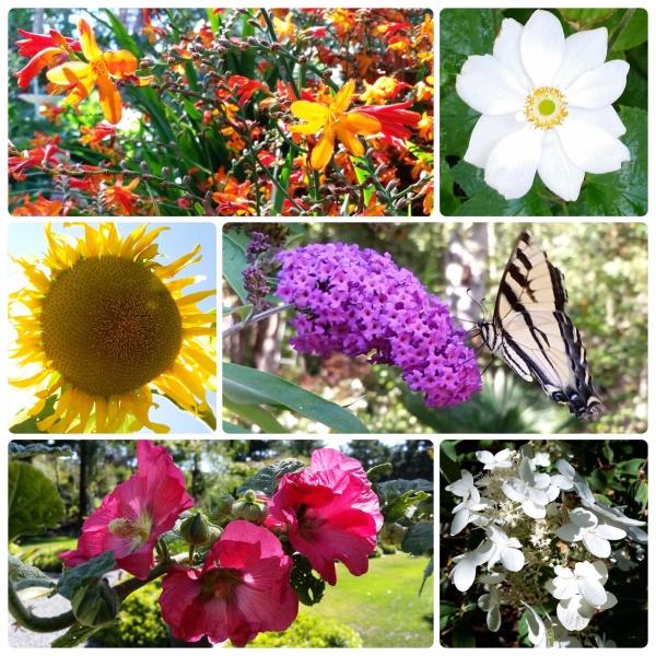 August Garden moments