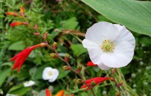Petaluma Blossoms