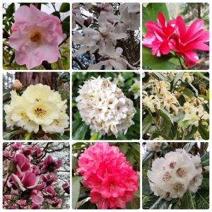 2016 SoCo Blossom trail